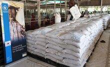 대한민국 쌀 5만 톤, 케냐·우간다 등 4개국에 배급 시작