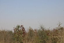 대한민국 정부, WFP-FAO 파키스탄 메뚜기떼 피해 복구사업에 20만 달러 지원
